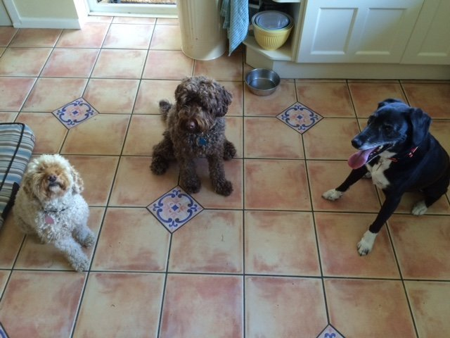 Dinner at Home Boarding with Ringwood Dogs