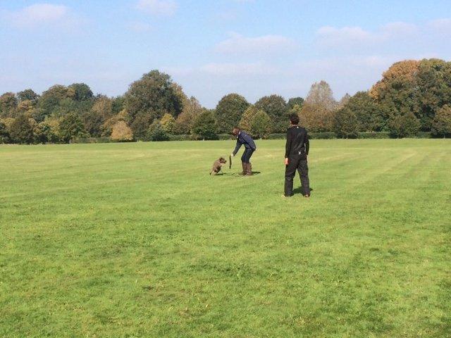 Dog Walking Beaminster