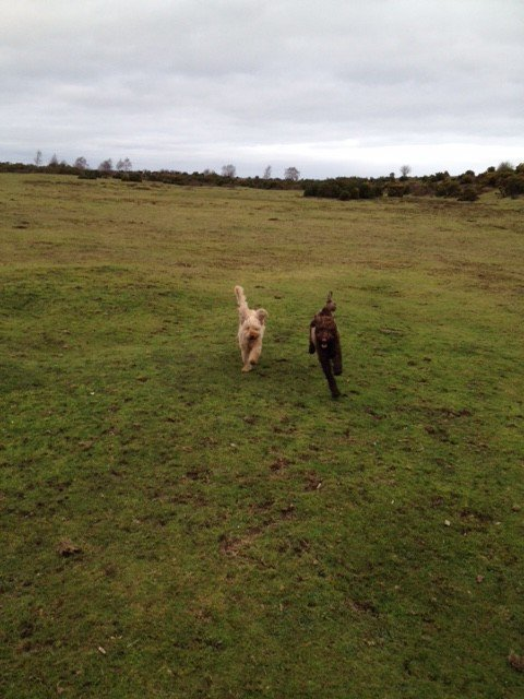 """Practising the """"Recall"""" command in the New Forest"""