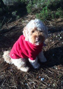 Equafleece winter dog fleece