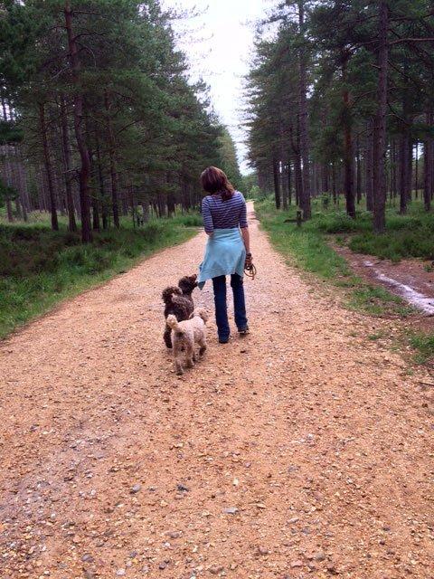 Dog Training Ringwood