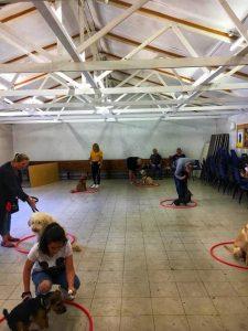 Ringwood Dogs - Training Club