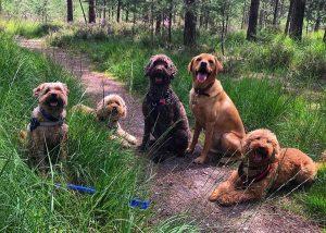 Ringwood Dogs - Dog & Puppy Training