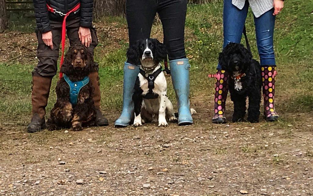 dog training class.