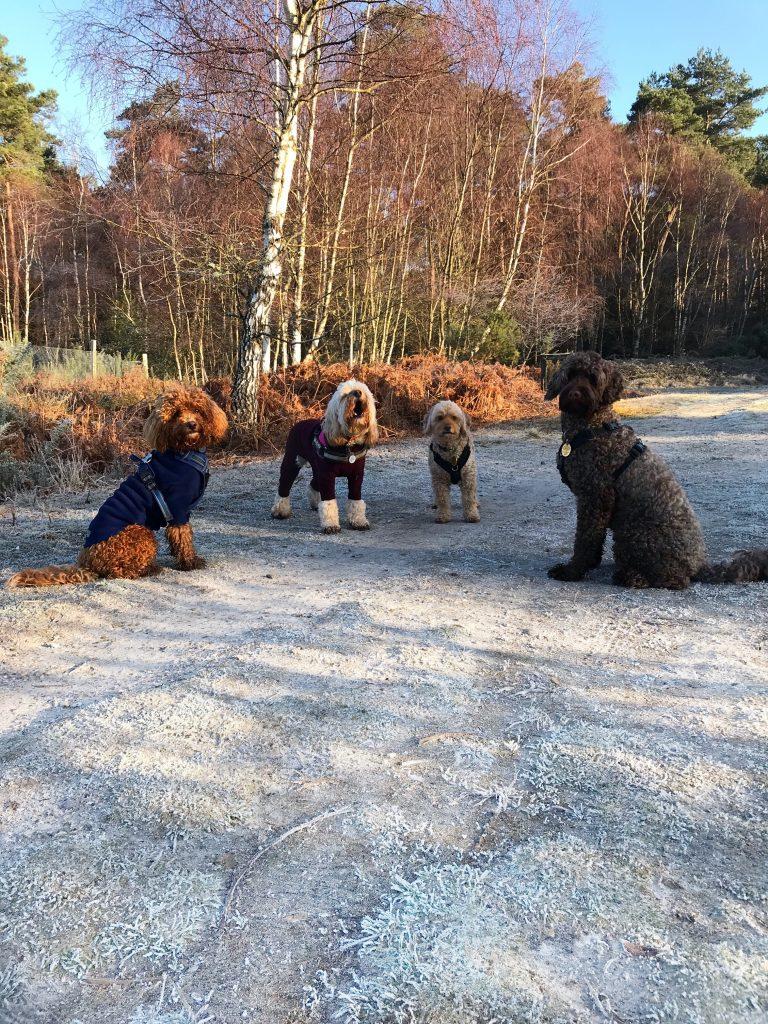 dogs walking in frost